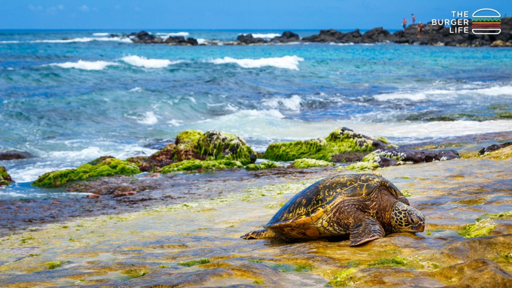 Turtle Beach, Oahu, Hawaii, 2014.